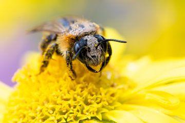 Pollen Snoeper von DaphnesEquiphotography