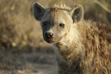 hyena van Laurence Van Hoeck