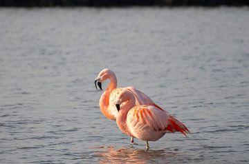 Flamingo van Merijn Loch