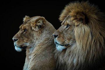 Löwe und Löwin Porträt von Marjolein van Middelkoop