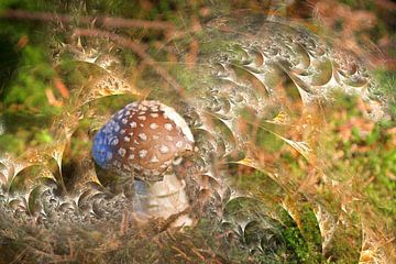 Désir de champignons sur Christine GUILLET