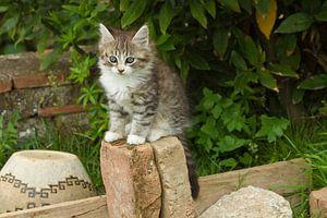 Jonge kat, kitten