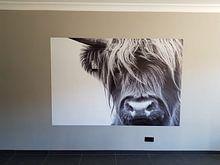 Klantfoto: Portret Schotse Hooglander zwart-wit van Sandra van Kampen, op naadloos behang