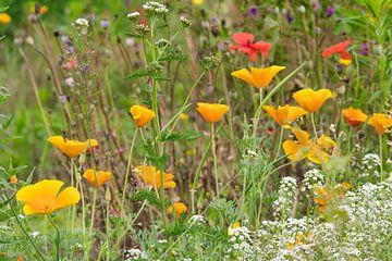 Buntes Blumenfeldparadies im Juli von J..M de Jong-Jansen