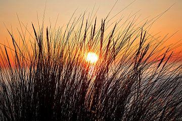 Boven de zee ondergaande zon genomen door wat rietstengels van Moo pix