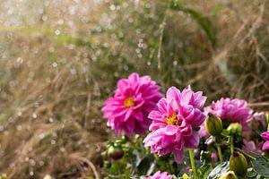 Blumen an einem dunstigen Morgen von Helga Novelli