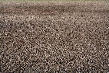 Omgeploegd en gezaaid veld met windvaan als vogelverschrikker van Peter de Kievith Fotografie