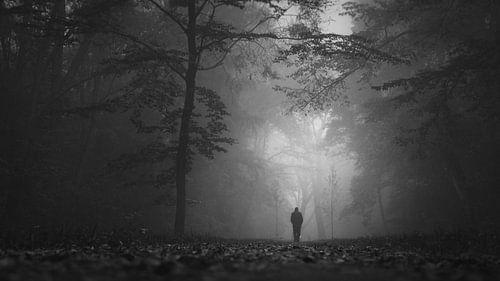 Misty forest walk