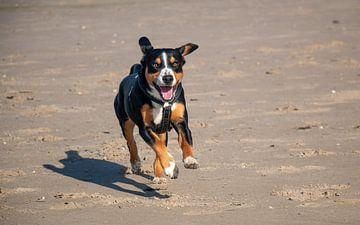 Run! van Pieter Heres