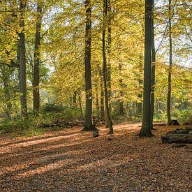 forêt en couleur automnale sur le veluwe sur Compuinfoto .