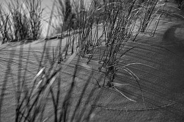 Helmgras op het duin van Rob Donders Beeldende kunst