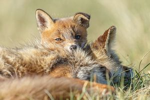 Knuffelen met moeders