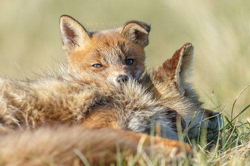Knuffelen met moeders van