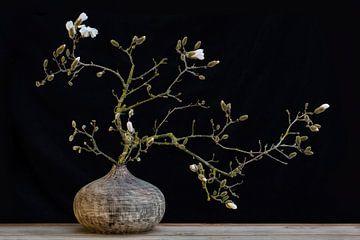 stilleven magnolia van Klaartje Majoor