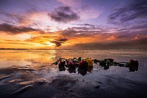 Sonnenuntergang Rosen im Meer von Mark de Bruin