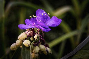 Tag Blume von Rob Boon
