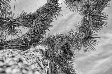 Joshua Tree von Loek van de Loo