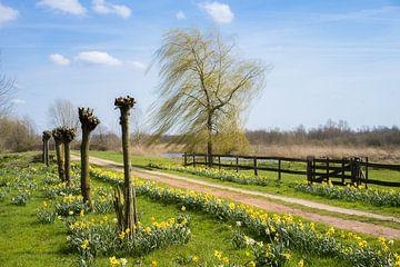 Narcissen in bloei van Roelof Nijholt