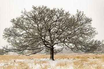 Winterkiekje op de Cartierheide van Marian Schepens