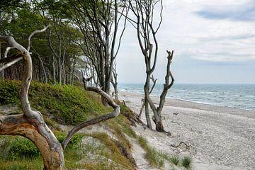 Halbinsel Fischland-Darß-Zingst von Joachim G. Pinkawa