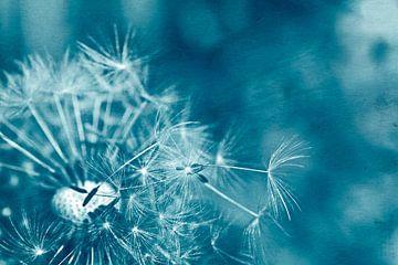 Pusteblume in Blau von Claudia Evans