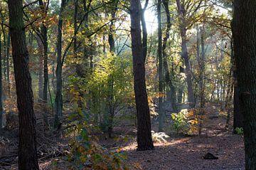 bos in de herfst von Rene Wassenbergh