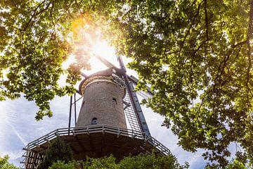 Mühle in Alkmaar, umgeben von Bäumen von Evelien Oerlemans