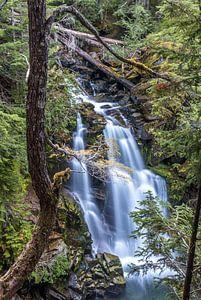 Carter Falls, Mount Rainier, USA van