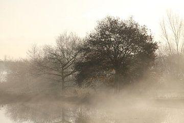 Ambiance automnale avec brouillard au sol sur un lac, Fischerhude, Basse-Saxe, Allemagne sur Torsten Krüger