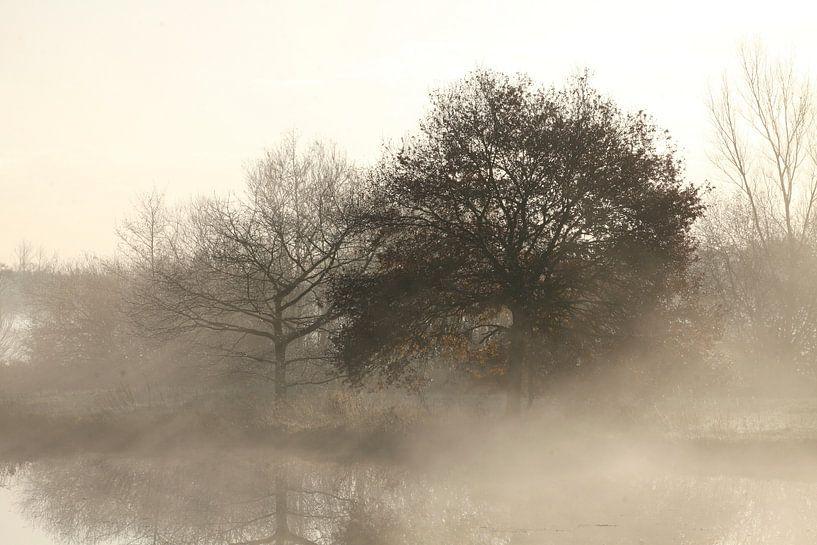 Herbststimmung mit Bodennebel an einem See, Fischerhude, Niedersachsen, Deutschland von Torsten Krüger