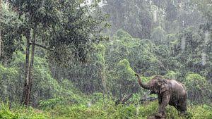 Aziatische Olifant in de regen in Thailand
