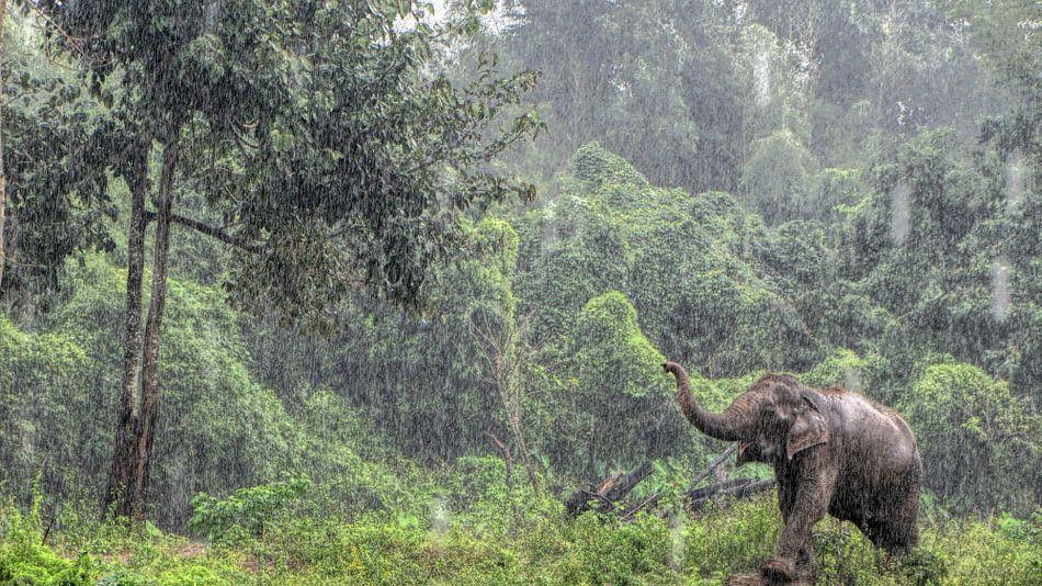 Aziatische Olifant in de regen in Thailand van Jeanique van den Berg