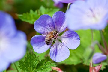 Honeybee van