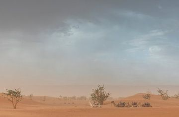 Kamele während eines Sandsturms in der Wüste Sahara (Erg Chegaga - Marokko) von Marcel Kerdijk