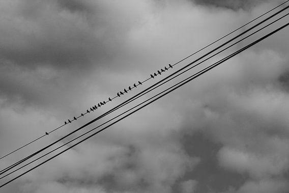 "#15 Nuenen, Nederland "" vogels op de kabel """