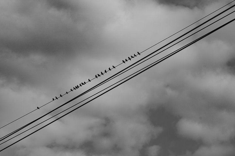 """#15 Nuenen, Nederland """" vogels op de kabel """" sur John Driessen"""