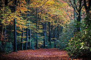 Herfst in het bos van Marjolijn Vledder