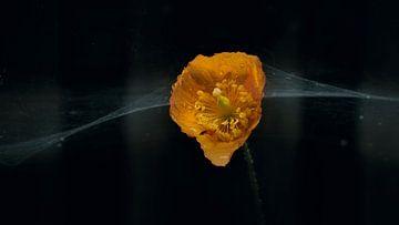 Webflower van Johannes Schotanus