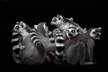 Eine Menge Katzenlemuren versammelten sich in einem Haufen (Gruppe) für eine Nacht Schlaf, unruhiger von Michael Semenov
