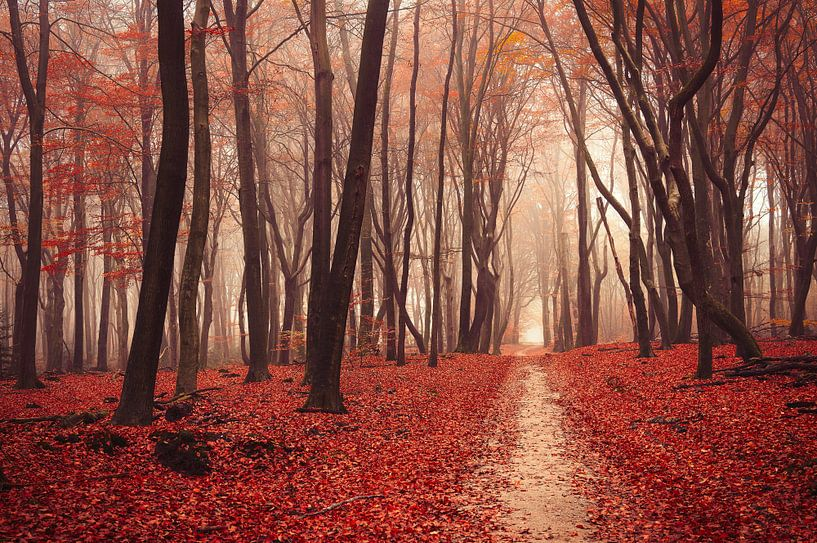 Heidense poëzie van Tvurk Photography