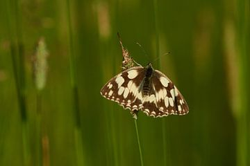 Geruite vlinder van Karin Jähne
