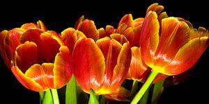 Tulpen ll