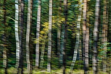 Mystisch tanzende Bäume im Herbstwald von Gert van Santen