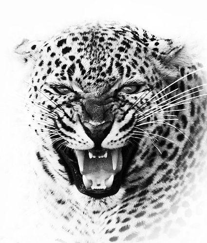 Leopard waarschuwt
