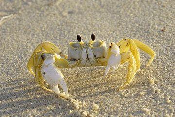 Krabbe von Danielle Kool