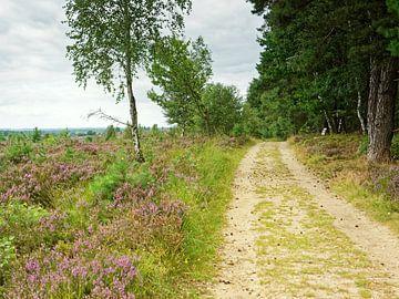 Pad tussen bos en heide van Gisela Scheffbuch