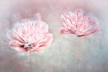 zwei Tulpen von Claudia Moeckel