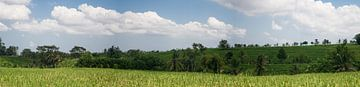 Balinees rijstvelden panorama van Leanne lovink