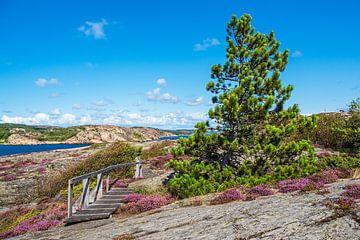 Landschaft auf der Insel Dyrön in Schweden von Rico Ködder
