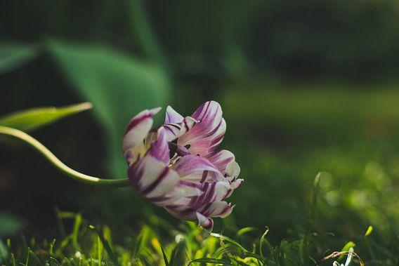 de stilte is te voelen bij deze bloem